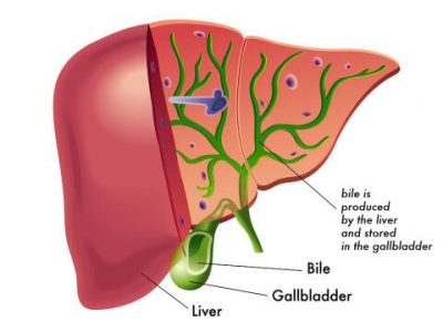 liver-and-gallbladder-480x360