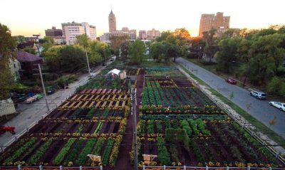 michigan-urban-farming-initiative-garden-1020x610