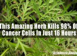Herb-Kills-Cancer-Cells