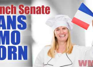 French Senate Bans GMO Corn