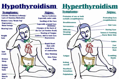 thyroid2-759x500