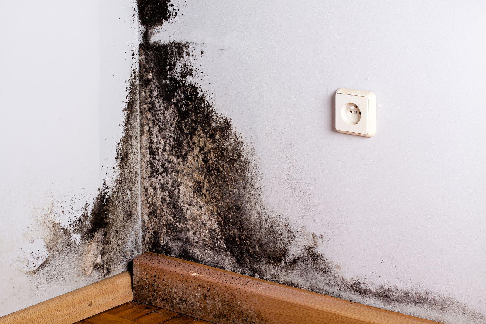Black Mold Symptoms You Need To Watch Out For & 12 Natural Remedies