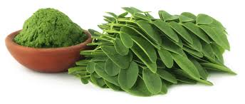 moringa powder leaf