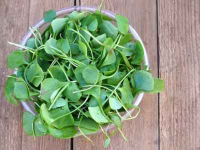 watercress_650